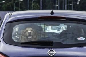 Pass på hunden i varmen. (Foto: Per Sibe)